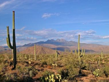 Sonoran_desert_matt